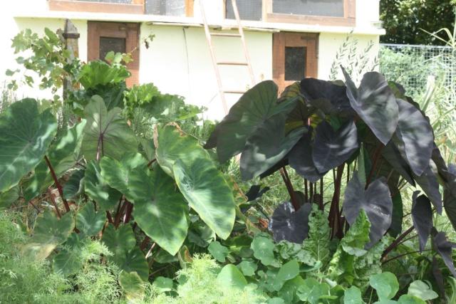 Mon Jardin limite Gers Landes 2019 Img_2215