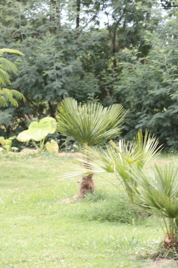Mon Jardin limite Gers Landes 2019 Img_2219