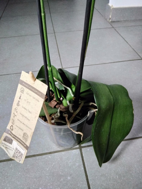 Orchidées mal en point Img_2018