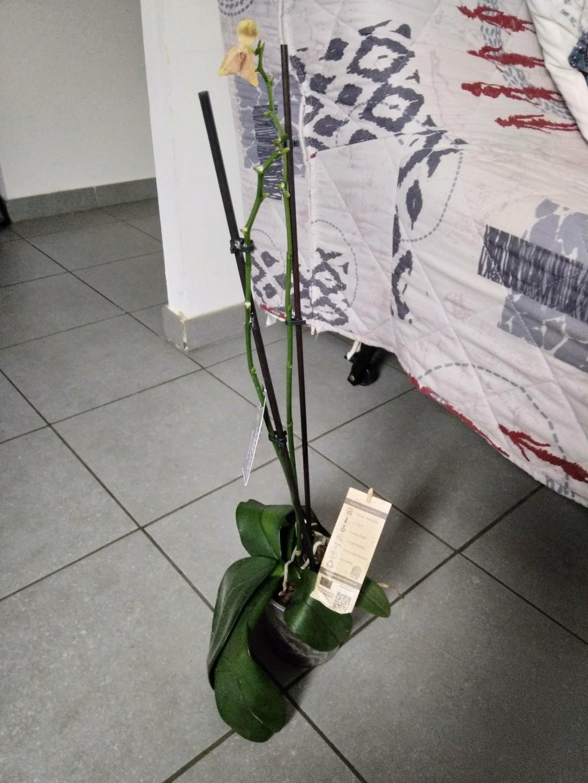 Orchidées mal en point Img_2019