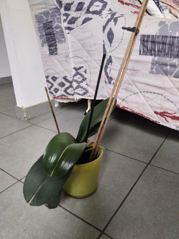 Orchidées mal en point Img_2022