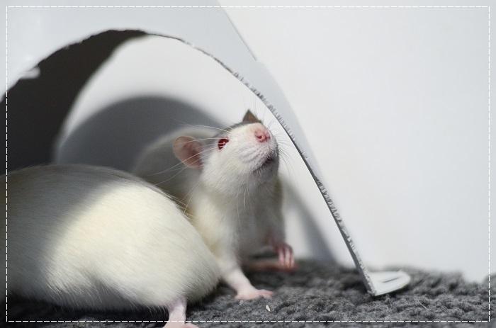 8 rates de laboratoire cherchent leurs familles  Albi_410