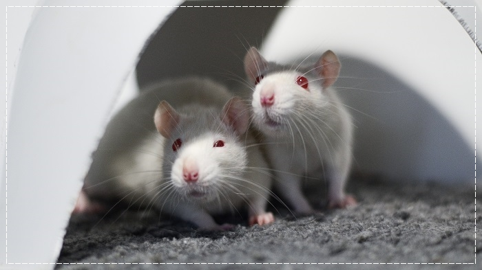 8 rates de laboratoire cherchent leurs familles  Albi_510