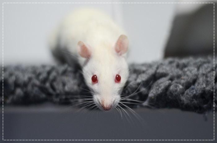 8 rates de laboratoire cherchent leurs familles  Albi_610