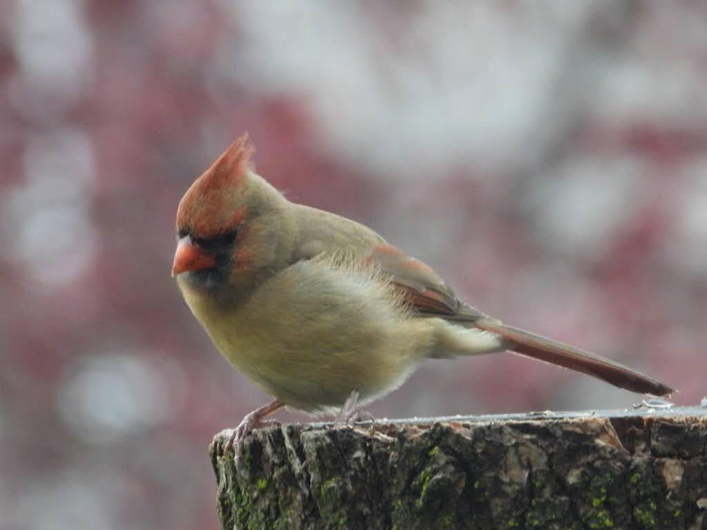 Bel oiseau à identifier, merci 2cbdd510