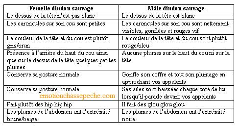 Dindon sauvage Unname96