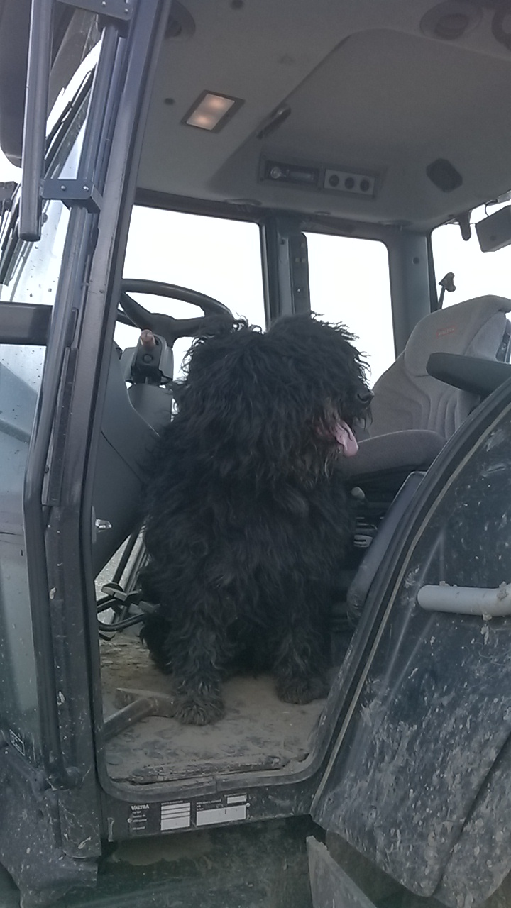 chien de troupeau Wp_20113