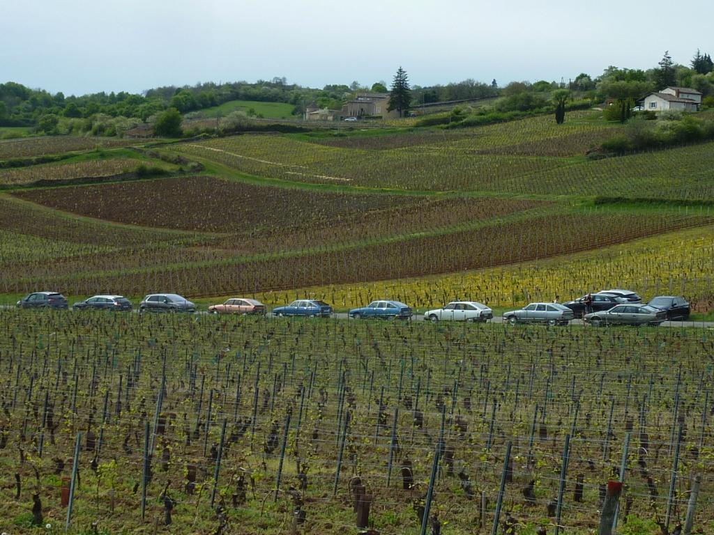 Sortie en Beaujolais (avril 2019) P1080012