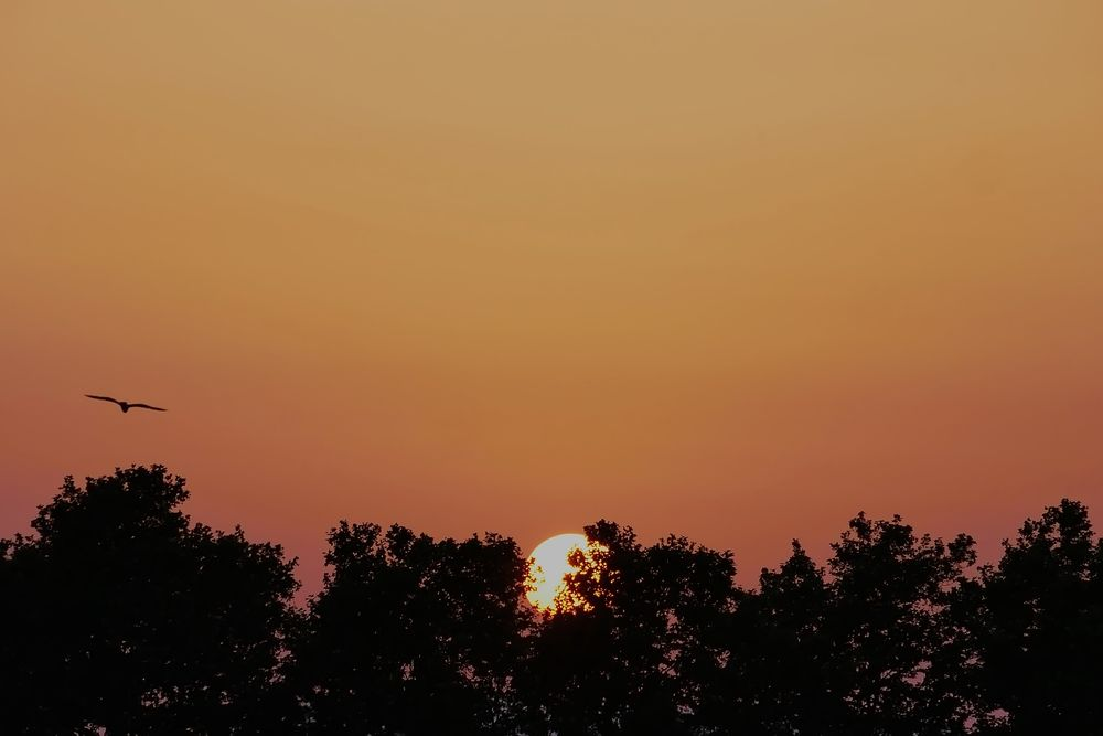 Coucher de soleil en plein été P1070012