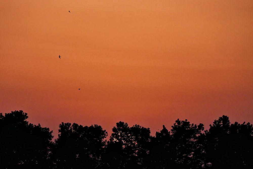 Coucher de soleil en plein été P1070013
