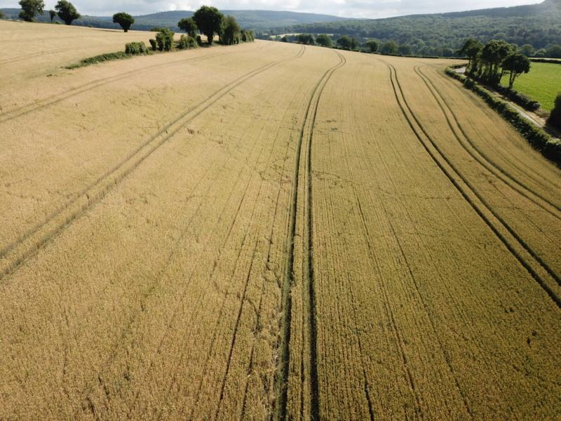suivis blé 2020 - Page 5 Dji_0033