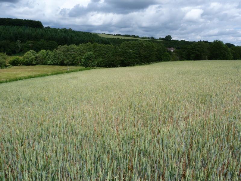 Suivi des blés 2020 - Page 4 P1010911