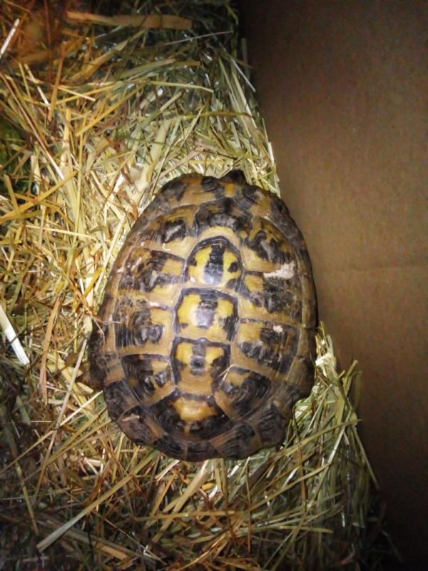 identification tortue trouvée Doss11