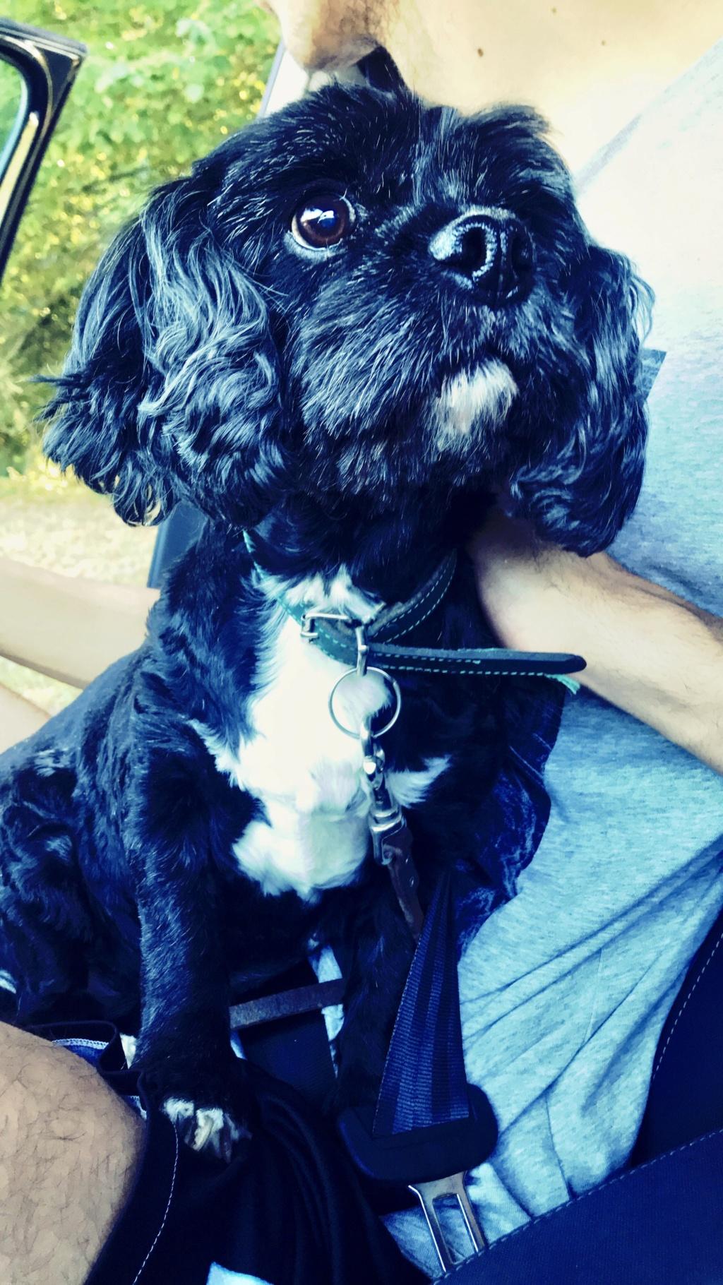 INDY, petite chienne parfaite, née en 2008 ADOPTÉE 20180937