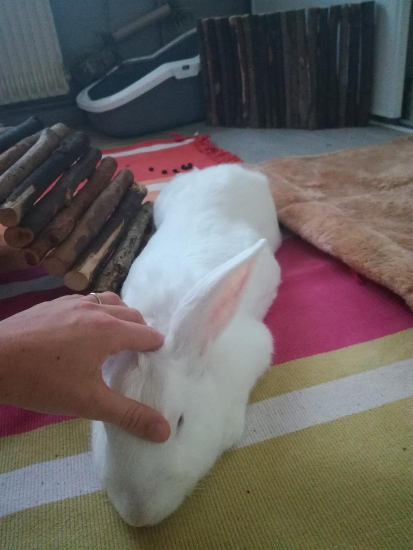 [ADOPTE] Krema, lapin réhabilité de laboratoire Img_2011