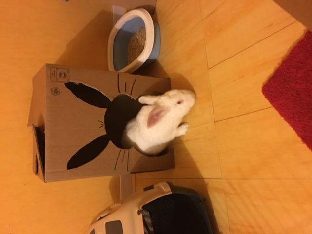[ADOPTE] Oreo, lapin réhabilité de laboratoire Img_2012