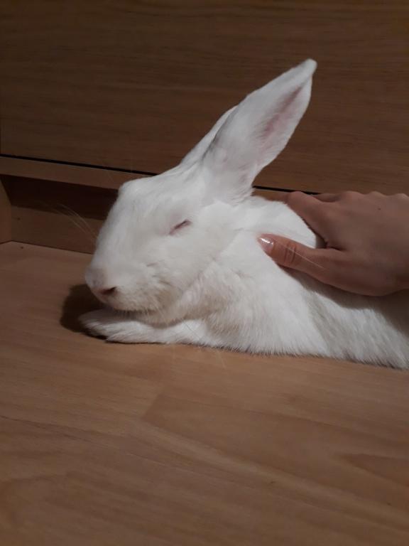 [ADOPTEE] Mara, lapine réhabilitée de laboratoire Mara2010