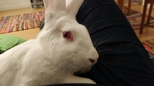 [ADOPTEE] Nori, lapine réhabilitée de laboratoire Part_111