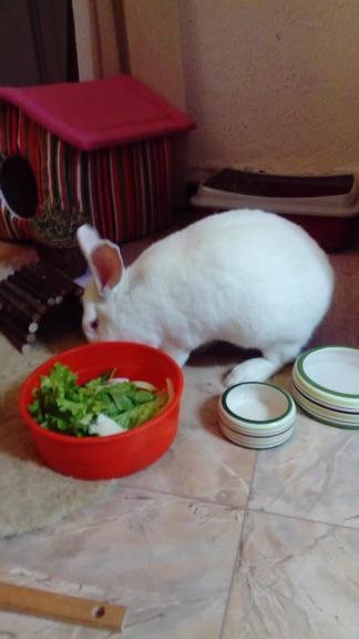 [A ADOPTER] Pogba, lapin réhabilité de laboratoire Pogbad15