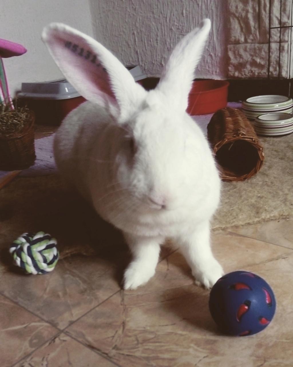 [A ADOPTER] Pogba, lapin réhabilité de laboratoire Pogbai10