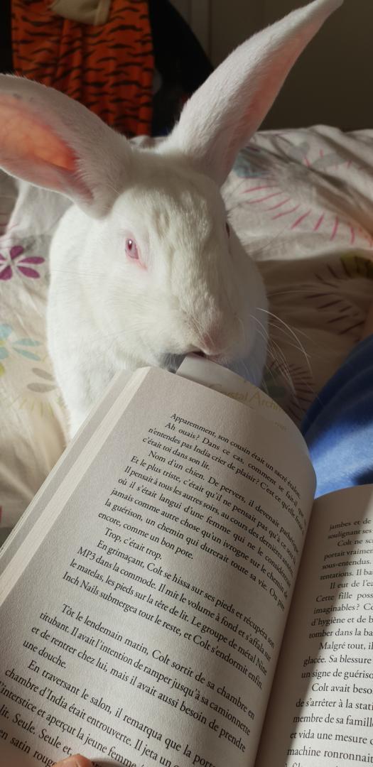 [ADOPTE] Popi, lapin réhabilité de laboratoire Resize18
