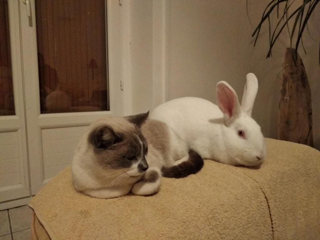 [ADOPTEE] Romy, lapine réhabilitée de laboratoire Romy5010