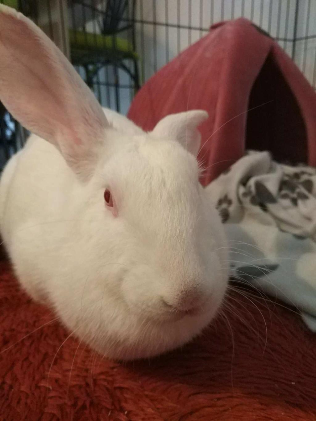 [A PARRAINER] Sia, lapine réhabilitée de laboratoire Temp110