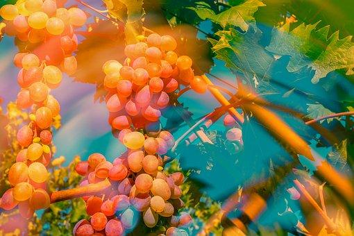 vendredi 5 septembre Grapes10
