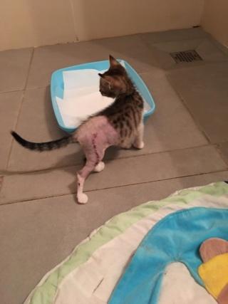 News du 6 Février 2019 - chatonne blessée 51924510