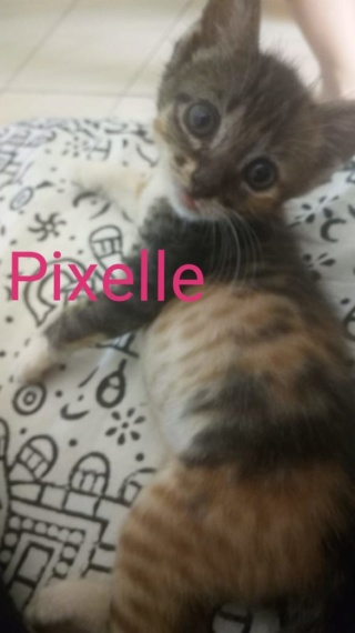 JAZZ (Pixelle) et COOKIE (Chanel) 53283310