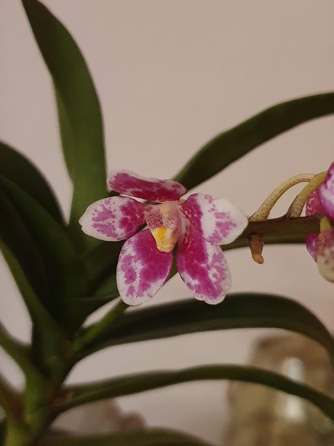 Orchideen-Neuzugang 2 - Seite 28 20200312