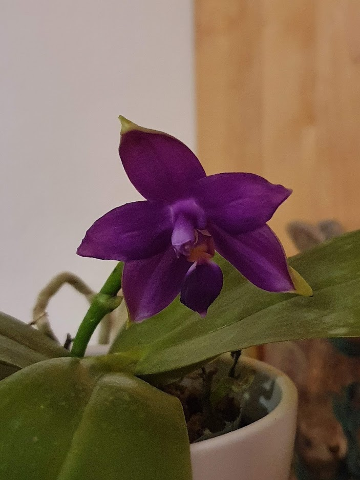 Orchideen-Neuzugang 2 - Seite 28 20200314