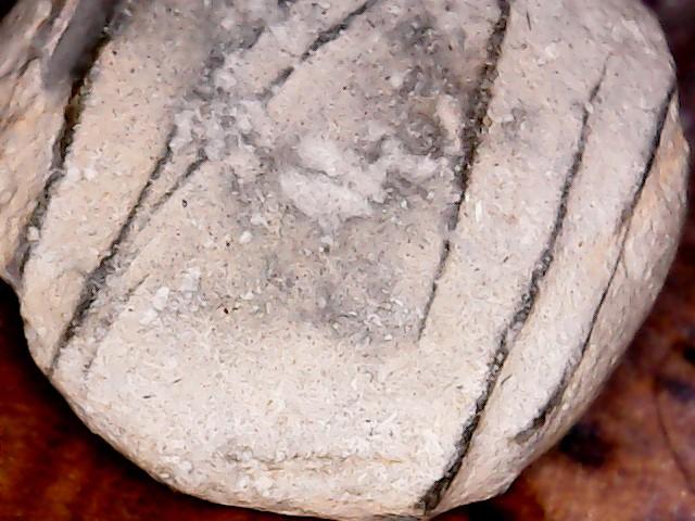¿Podrían ser fósiles? Win_2012