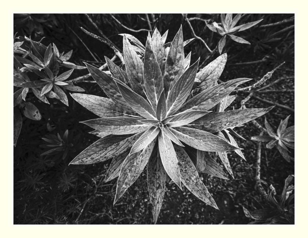 Paysages des Canaries _1005910