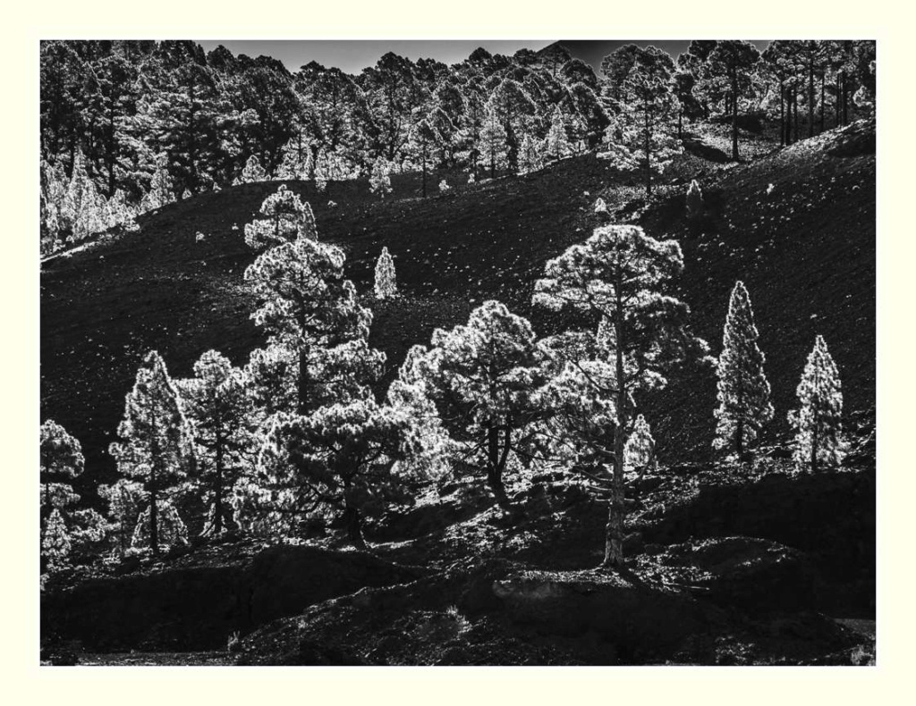 Paysages des Canaries _1016910