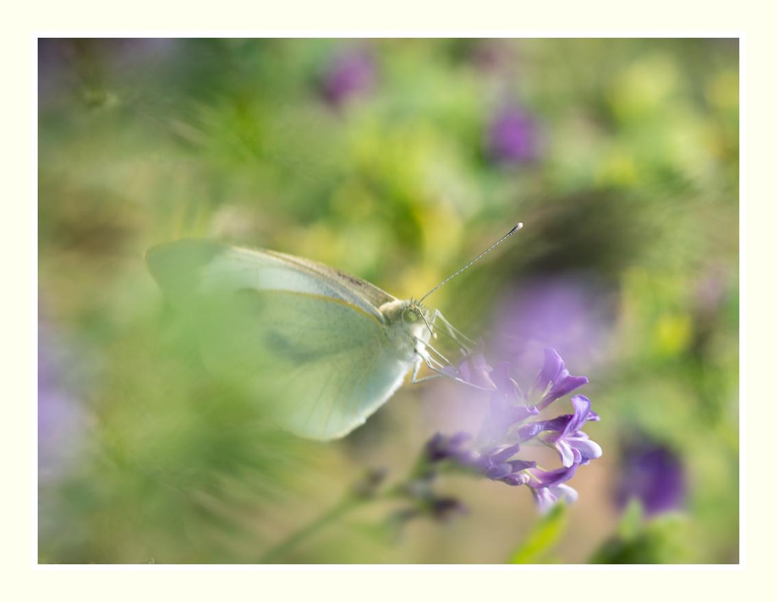 A la chasse aux papillons _1020211