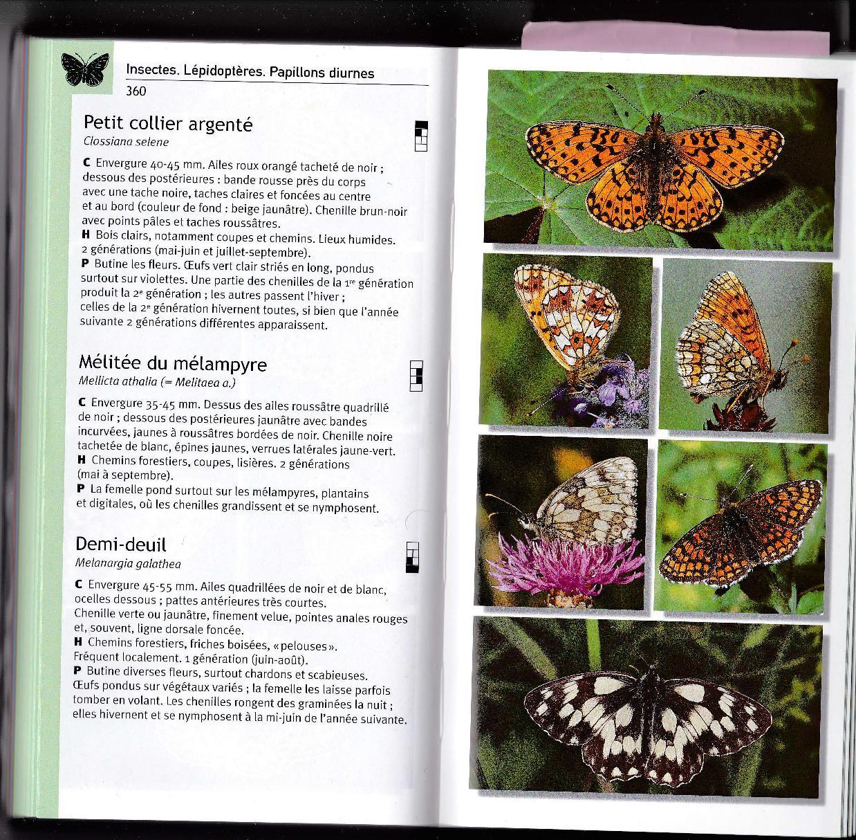 A la chasse aux papillons Img_2010