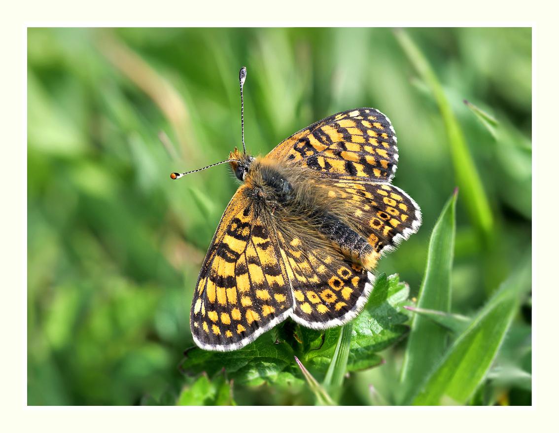 A la chasse aux papillons P1005312