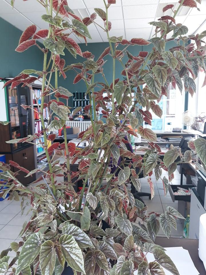 feuilles qui roulent 67033614