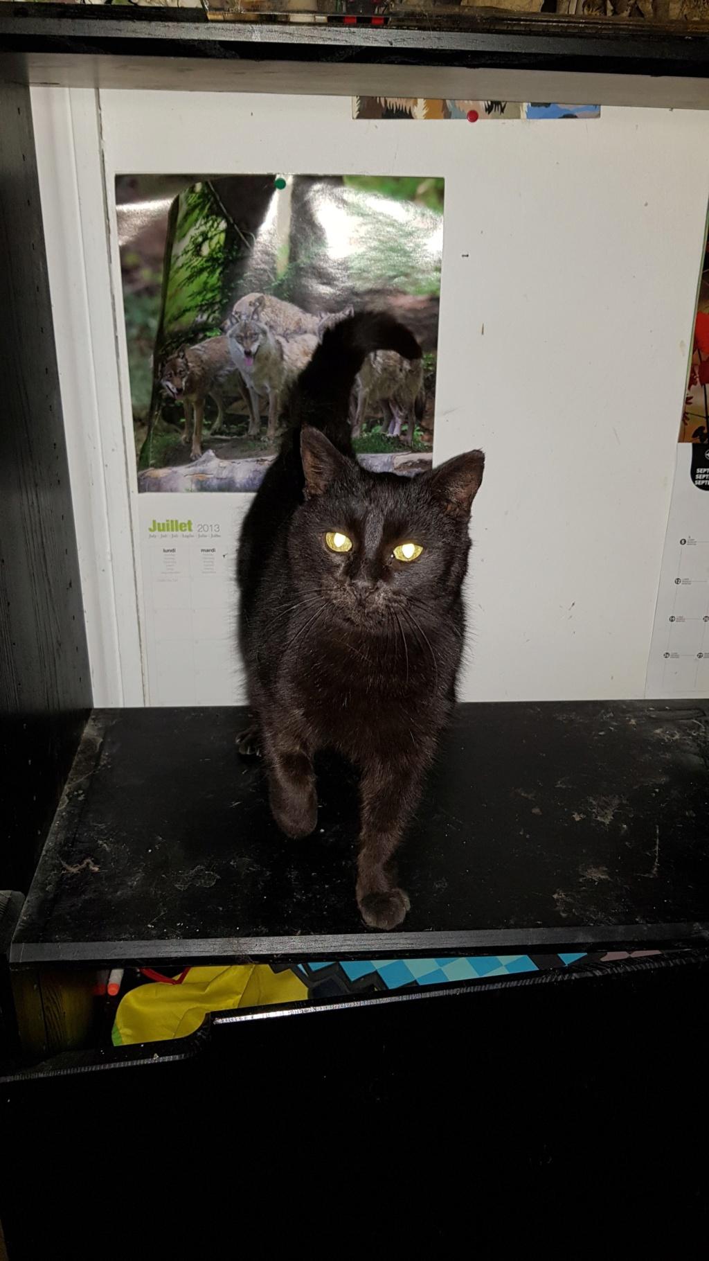 cool chatte noire jouir salopes