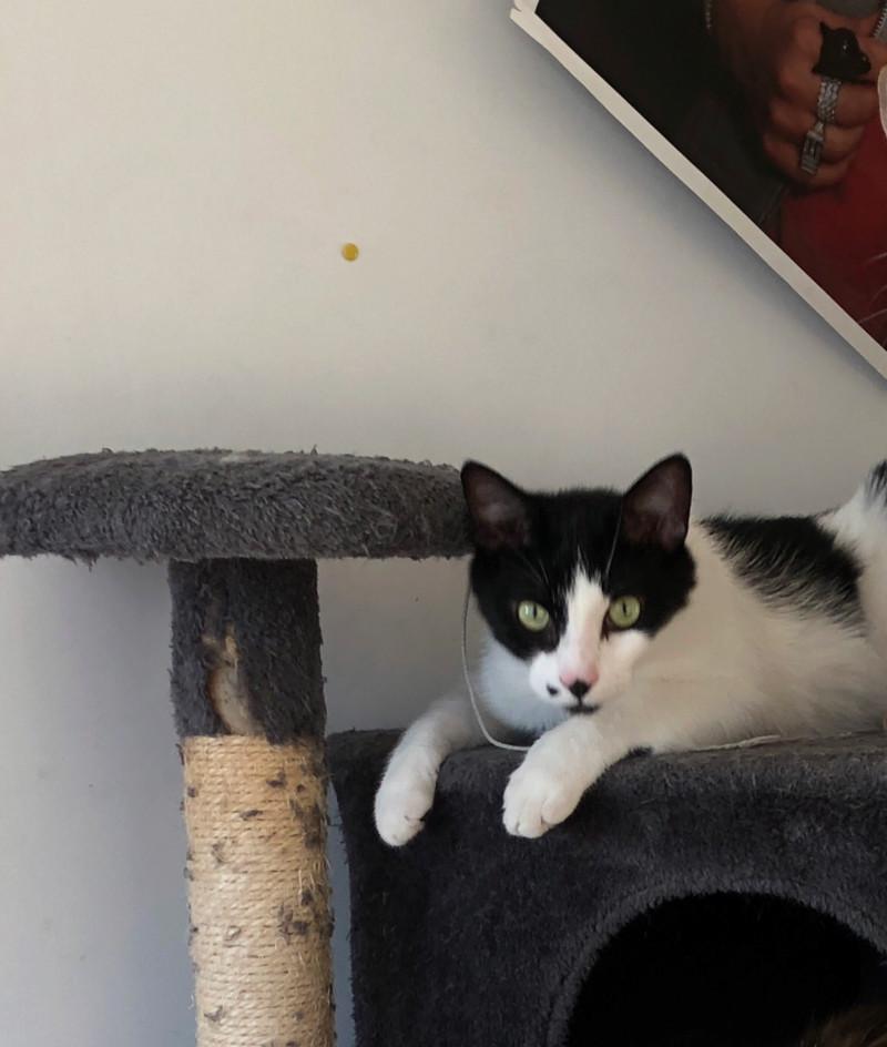 Malbo cherche foyer amoureux des chats / RP Champigny sur Marne 15378710