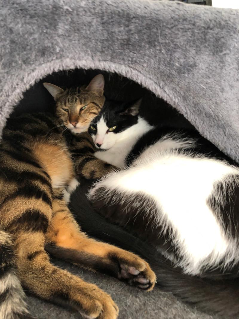 Malbo cherche foyer amoureux des chats / RP Champigny sur Marne 15379010