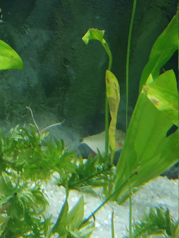 Identification piranha juvénile  Img_2012