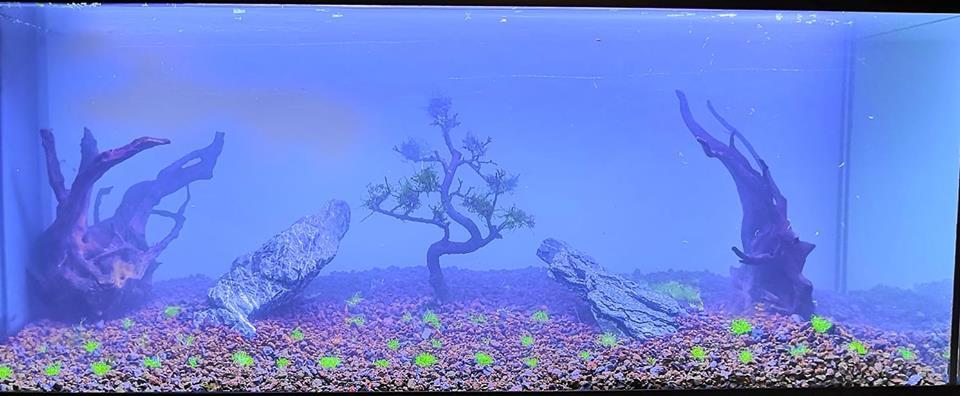 Présentation AquariumAuxRequins 51662310