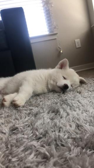 Meet Kelvi! Img_7611