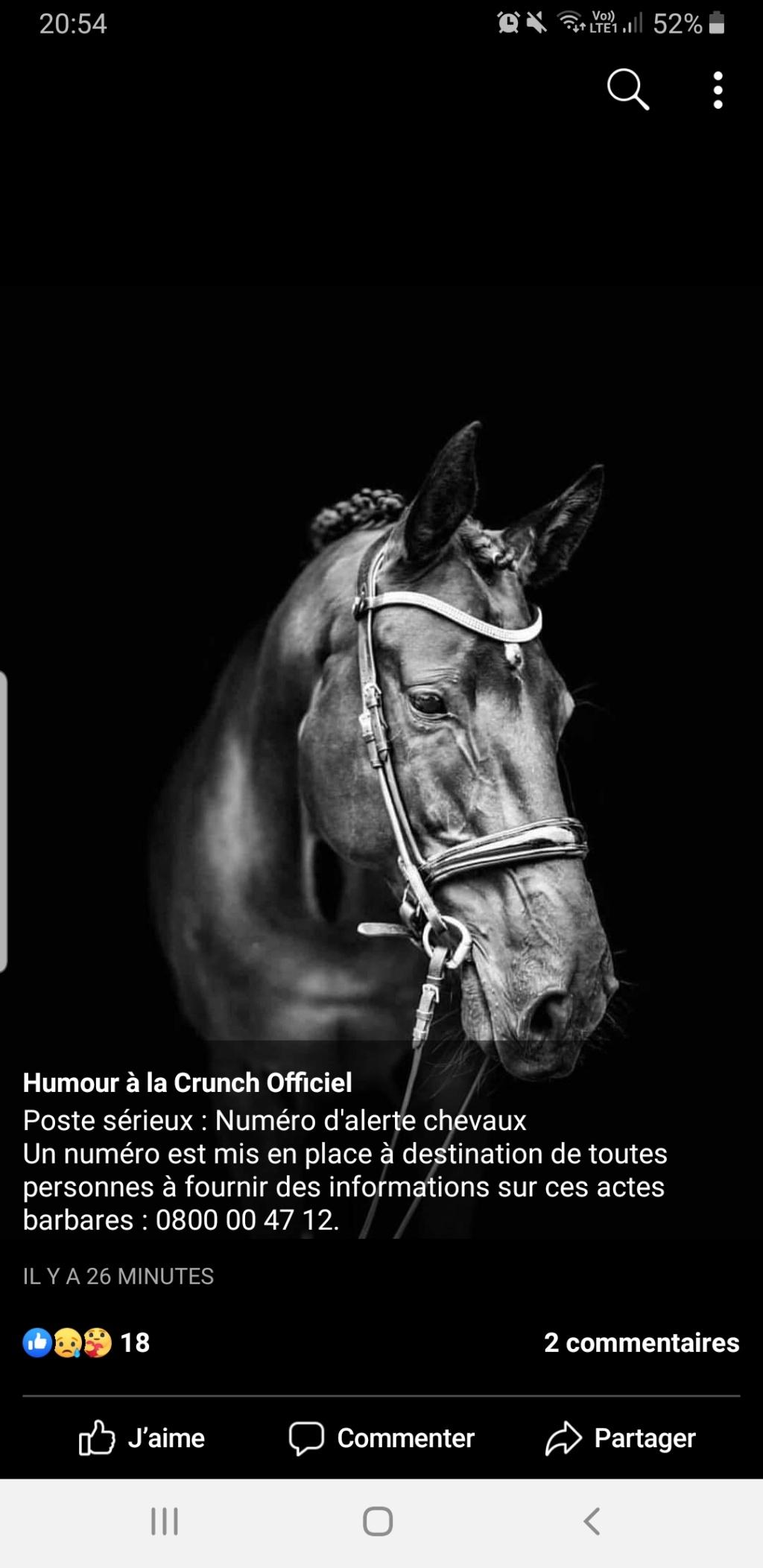 Chevaux , animaux torturés,  mutilés  Screen32