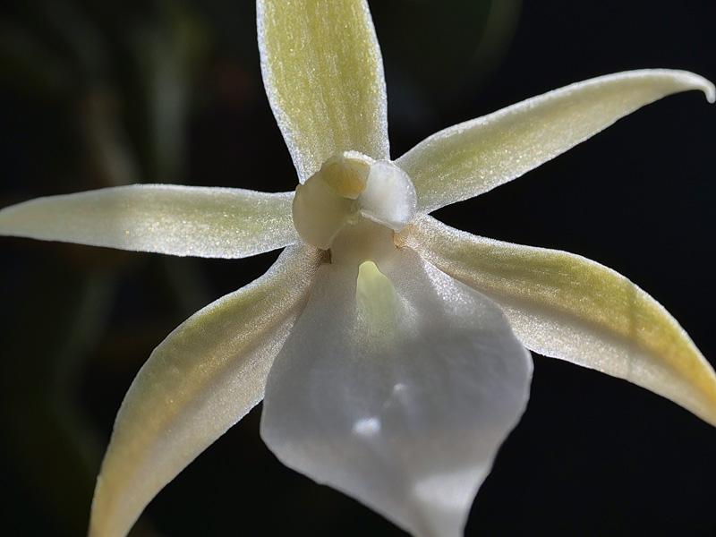 Miniatur-Orchideen Teil 5 - Seite 41 03010