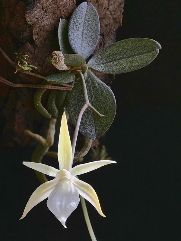 Miniatur-Orchideen Teil 5 - Seite 41 103011