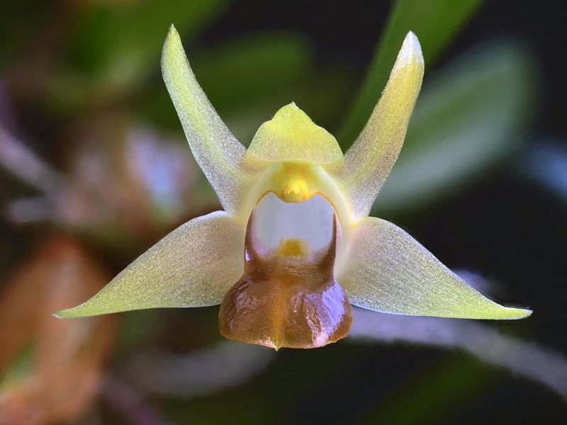 Miniatur-Orchideen Teil 6 2020-055