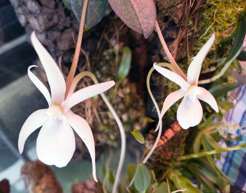 Miniatur-Orchideen Teil 5 - Seite 43 20200916